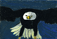 Bald Eagle chalk drawing